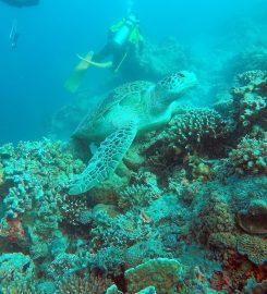 Borneo Climb & Dive Sdn. Bhd., Sabah