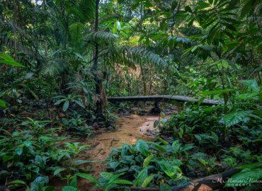 Kota Damansara Community Forest Reserve, Selangor