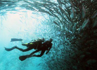 Borneo Divers & Sea Sports (S) Sdn. Bhd., Sabah